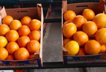 Arance mandarini limoni BIO Ribera città delle arance siciliane - eccoloo.it