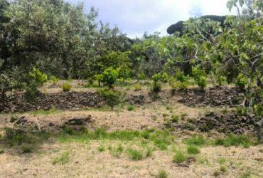 Terreno con rudere