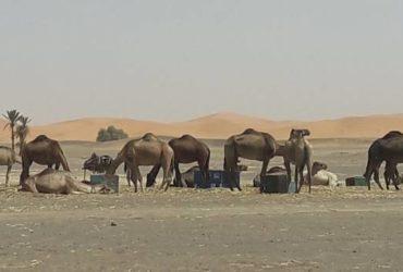 Tour operator Marocco, Antonio guida privata