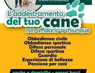 Addestramento cani e pensione per cani